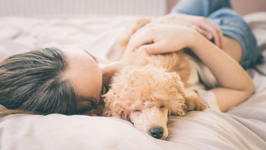 Beneficios de dormir con tu mascota