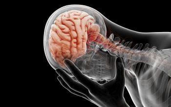 diagrama del cerebro