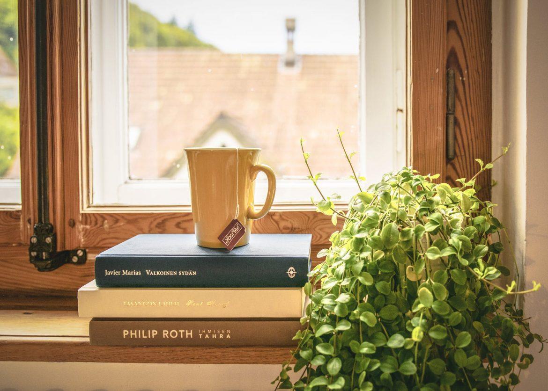 Lugares para coloca tu planta favorita