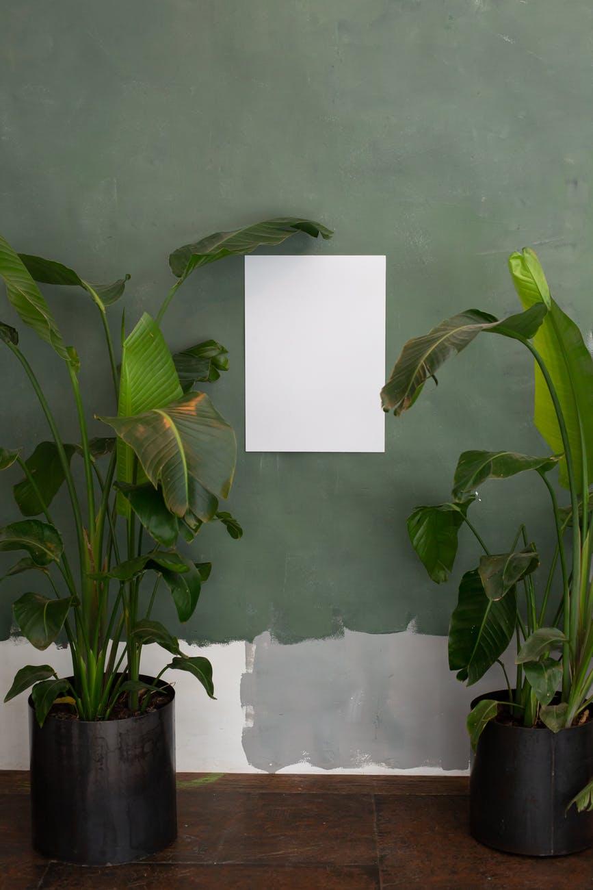 Lugares para plantas